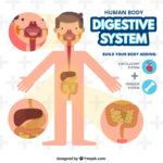 腸 人体図